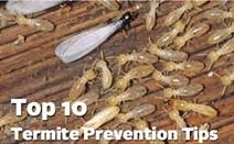 termite-prevention
